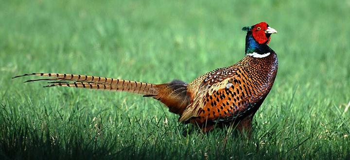 Dopo sei anni una nuova legge sulla caccia e la tutela della fauna